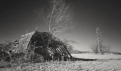 and then there was one...(HWW) (BillsExplorations) Tags: windmillwednesday windmill waterpump barn ruins collapsed destroyed abandoned abandonedillinois abandonedfarm hww blackandwhite monochrome one andthentherewasone tree field landscape