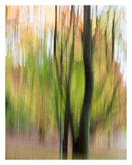 Autumnal palette (Francisco (PortoPortugal)) Tags: 0182018 20181122fpbo8816 icm intentionalcameramovement autumn outono árvores trees franciscooliveira