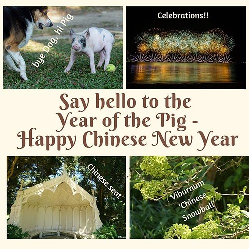 Happy Chinese New Year! We move from the Year of the Dog to the Year of the Pig. So perhaps you should expect a garden redesign featuring #ChineseLanterns aka #Abutilon rather then #Dogwood aka #Cornus 😉 #gardendesigns