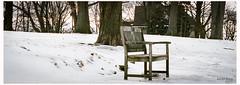 Lonely bench (KaushikBiswas28) Tags: toronto wood snow ontario 6ix bench canoncanada film analog filmisstillalive downtowncamera ishootfilm iluvfilm fatalframes framedtoronto tree missingsummer waitingforthewarmth tcc torontocameraclub grey winter kodak portra160 love park yonge pano