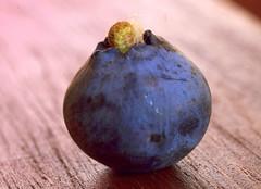guest // gość (stempel*) Tags: polska poland polen polonia gambezia pentax k30 macro makro borówka amerykańska owoc fruit larwa