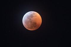 Organic Ruby Red (gseloff) Tags: moon eclipse stars bloodmoon wolfmoon supermoon sky astronomy gseloff