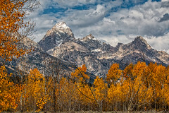 FallTons 14.2 (Photography by Stefano Carini) Tags: tetonrange grandteton grandtetonnationalpark gtnp mountains fallcolors trees snow clouds bluesky nature outdoors wyoming wyominglandscape wyomingnaturefall wyomingfallcolors tetonfallcolors