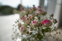 roses at the window (ivoräber) Tags: flower rose rosen floristic flowers