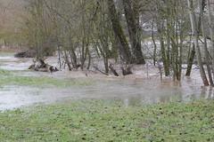 SK_2019-03-15_1060049 (Stephan_66) Tags: hochwasser eschachtal eschach bach überschwemmung