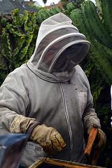 DSC_9767-61 (jjldickinson) Tags: nikond3300 107d3300 nikon1855mmf3556gvriiafsdxnikkor promaster52mmdigitalhdprotectionfilter longbeach bixbyknolls longbeachbeekeepers outreach class beeprepared insect bee honeybee apismellifera hive hiveinspection dickbarnes
