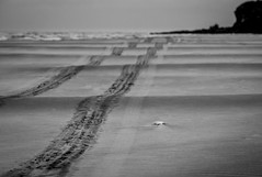Sand tracks (802701) Tags: 2018 201812 43 aotearoa december december2018 em1 em1markii em1mkii mft micro43 nz newzealand newzealandsouthisland omd omdem1 oceania olympus olympusomdem1 olympusomdem1mkii otago southisland waitati beach beaches fourthirds island microfourthirds mirrorless naturalworld nature outdoors photography sand sea travel travelling