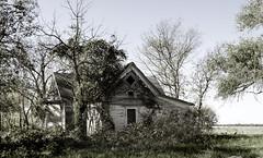 Harris, Kansas (unknown quantity) Tags: abandonedhouse shadows trees peelingpaint horizon wires deterioration underbrush neglect weathered
