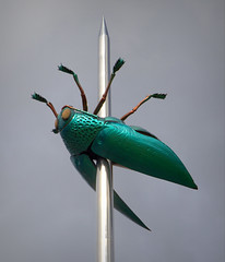 Beetle (Phil*ippe) Tags: beetle leuven jan fabre art ladeuzeplein pin needle scarabee kever 23 meter green 2004 totem polyester clouds sky insect