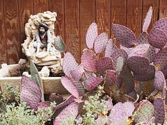 P4110123 copy (nooravesalainen) Tags: 2017 america travel redrock usa nevada cactus lasvegas