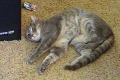 Millie 26 January 2019 2362Ri 4x6 (edgarandron - Busy!) Tags: cat cats kitty kitties tabby tabbies cute feline
