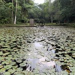 A Water Wheel, the Lake of the Ipiranga Creek Springs, the Botanical Garden of São Paulo, Brazil. thumbnail