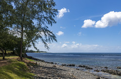 Pirate Ancor / Пиратский мыс (dmilokt) Tags: природа nature пейзаж landscape лес небо облако пальма дерево forest sky cloud palm tree море океан sea ocean dmilokt