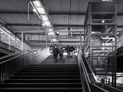 2019-04-13-190450_bw (Schmidtze) Tags: architektur ausflug bahnhof bahnhofostkreuz berlin berlinfriedrichshainkreuzberg berlinfriedrichshainkreuzbergfriedrichshain blackandwhite building einfarbig fototour friedrichshain gebäude olympusepl9 olympusm918mmf4056 railwaystation schwarzweis stadt stair staircase treppe menschenleer