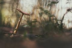 (a└3 X) Tags: natur nature alexfenzl olympus outdoor color makro austria macro macrofotografie mushroom pilze fungi wildlife 3x a└3x availablelight bokeh closeup wow