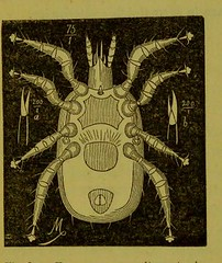 This image is taken from Page 23 of Les acariens parasites [electronic resource] (Medical Heritage Library, Inc.) Tags: acari arachnid vectors wellcomelibrary ukmhl medicalheritagelibrary europeanlibraries date1892 idb20406186