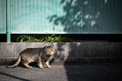 猫 (fumi*23) Tags: ilce7rm3 sony street sel85f18 85mm fe85mmf18 katze neko cat chat gato a7r3 animal ねこ 猫 ソニー