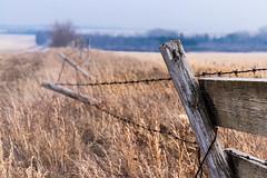 HFF (hey ~ it's me lea) Tags: hff fence fencefriday happyfencefriday alberta rural panoramaroad