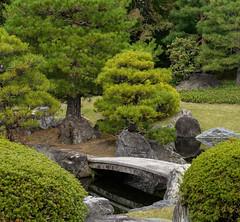 Bridge among the pines (Tim Ravenscroft) Tags: bridge pine trees garden foliage nijo castle kyoto japan japanese hasselbladx1d hasselblad