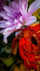 Bouquet (TyroCharm) Tags: flowers pink beauty nature bouquet summer spring red orange tyrocharm closeup purple floweroftheday garden