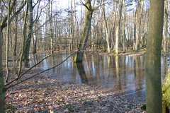 diesen Sommer noch trocken (rainer.marx) Tags: köln cologne fz1000 lumix panasonic leica naturschutzgebiet porz wasser