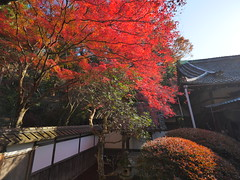 京都山科毘沙門堂 (Eiki Wang) Tags: 京都 山科 yamashina 毘沙門堂 kyoto momiji 紅葉 楓