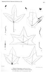beitrgezurpal03wien_0221 (kreidefossilien2) Tags: velenovský bohemiancretaceousbasin bohemian czech republic palaeobotany flora kieslingswalde