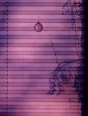 Autumn branches (theflyingtoaster14) Tags: autumn branches herbst äste schatten shadows schattenspiel jalousie kristallkugel crystal ball violet violett light morning licht morgen olympus omd em1 mark ii