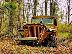Jeep CJ-3B (olds.wolfram) Tags: jeep car cj3b auto oldtimer geländewagen wald baum grün willysoverland willyswagon abandoned forgotten rust rusty patina overgrown stationwagon