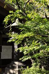 Lantern in greenery (DameBoudicca) Tags: tokyo tokio 東京 japan nippon nihon 日本 japón japon giappone atago 愛宕 愛宕神社 atagojinja atagoshrine jinja shrine schrein sanctuaire helgedom 神社 shinto 神道 lantern lykta lanterne laterne lanterna farol tōrō toro 灯籠 灯篭 灯楼 green grön grün verde vert 青い