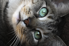 Green-Eyed Cat (TW Olympia) Tags: