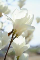 DSCF1447 (Keishi Etoh rough-and-ready photoglaph) Tags: flower fujifilm xh1 fujifilmxh1 apsc canonfdmacro50mmf35scc canon 75mm mf manualfocuslens primelens fixedfocallengthlens oldlens 単焦点 中望遠 中望遠マクロ