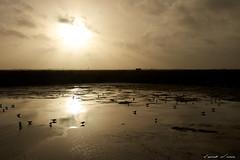 Coucher de soleil sur les marais salants (Laurent Nicosia) Tags: coucherdesoleil maraissalants oiseaux contrejour soleil eau bretagne pentaxart smcpentaxda1770mmf4alifsdm sunset