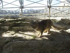 IMG_6466 (Damien Marcellin Tournay) Tags: amphitheatrumromanum antiquité bouchesdurhône arles france amphithéâtre gladiateur gladiators pfoum chat gatto cat