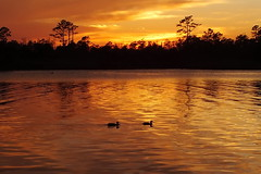 ...two ducks and a deer (Jim Atkins Sr) Tags: sunset cloudscape spectacularsunsetsandsunrises duck creek northwestcreek northcarolina forest fujifilm hs30exr finepix