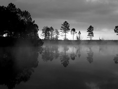 black & white (evablanchardcouet) Tags: landscape trees reflections water sky mist