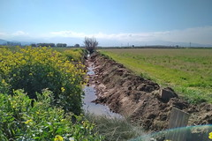 Las acequias (Micheo) Tags: spain acequia riego irrigation water agua paisaje landscape vegadegranada campos fields alfalfa