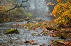 Streaming Into Fall (Robert C. Armstrong) Tags: canon canon5dmarkii canonusa nature autumn fall westmoreland pennsylvania