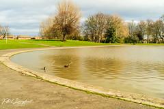 Walton Hall Park Lake March 2019 (Phil Longfoot Photography) Tags: nature naturephotography naturephotos coots springtime sun ducks geese goose trees tree leisure pathways paths liverpool merseyside