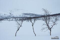 At the Border (kevin-palmer) Tags: finland finnishlapland arctic europe kilpisjärvi cloudy overcast march winter snow snowy scandinavianmountains birchtrees frozen lake sweden enontekiö nikond750 tamron2470mmf28