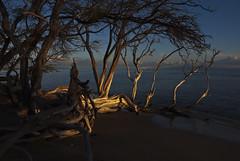 DRIVEIII (paulosabado) Tags: maui hawaii beach sunset tree landscape