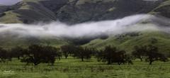 Fog in the Morning (NormFox) Tags: america blackandwhite california farm field fineartphotography fog grassland hills landscape mood morning mountains outdoor senic serene sky trees usa unitedstates
