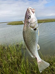 Fishing Galveston Island State Park, TX (- Adam Reeder -) Tags: bird y2019 m03 d24 lat290 lon950 galveston texas united states photo jpg apple iphone x fishing island state park tx