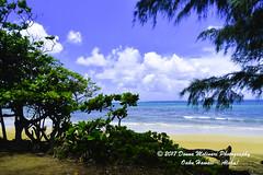 OAHU-HAWAII_1D50950-01 (Donna Molinari Photography) Tags: sanjose ca usa