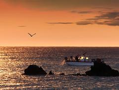 Relève des filets (doumé piazzolli) Tags: occitanie france pêcheur capdagde sunrise hérault languedoc filet relève bateau reflets doré mediterranèe mer sea seagull oiseau bird ciel nuage aurore aube rocher horizon pêche lumix fz200 leverdusoleil