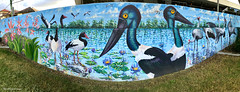 Phaius australis - Lesser Swamp Orchid, Southern Swamp Orchid, Ephippiorhynchus asiaticus - Black-necked Stork, Anseranas semipalmata - Magpie Geese  - Ages of the Tweed Mural, Commercial Rd, Murwillumbah, NSW (Black Diamond Images) Tags: agesofthetweedmural jurassic jurassicperiod megafauna earthlearning mural art painting floodmitigationwall commercialrd murwillumbah nsw murwillumbahartstrail appleiphone7plus iphone7plusbackdualcamera iphone7plus phone7plus iphone appleiphonepanorama panorama iphonepanorama appleiphone7pluspanorama ephippiorhynchus ephippiorhynchusasiaticusblackneckedstork anseranassemipalmata magpiegeese commercialroad antigone antigonerubicunda brolga freshwaterbirds birds