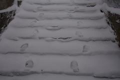 Lumises Rakveres (anuwintschalek) Tags: nikond7200 18140vr eesti estland estonia rakvere lumi schnee snow snowfall tuisk schneetreiben schneesturm schneefall trepp treppe stairs rakvereteater january 2019 jäljed fussstapfen