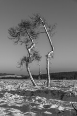 JPB_3283.jpg (Clic-Clac Boulle Photograpy) Tags: d850 nikon nikkor nikor belgique fagnes mont rigi baraque fraiture noir flohay neur arbres mort soleil sun coucher lune moon best pictures et blanc 24 120 mm f4 vr lightroom nature paysage beautifull