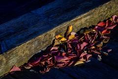Last Autumn Colors (NathalieSt) Tags: autresmotsclés camargue coucherdesoleil europe france gard languedocroussillon legrauduroi nikon nikond750 nikonpassion nikonphotography port sunset