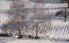 En attendant le printemps (mrieffly) Tags: alsace htrhin hautesvosges geishouse bouleaux neige canoneos50d 100400canon
